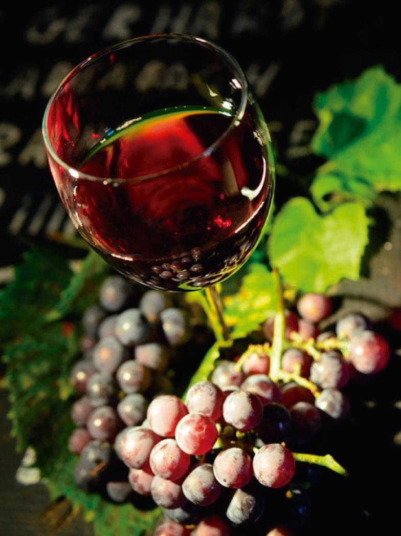 vino-784